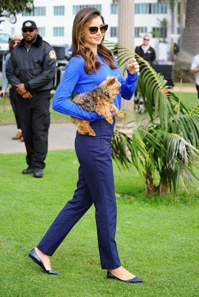 Para Miranda no basta con llevar a su mascota a su trabajo, sino que tam...