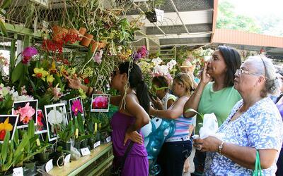 Comienza el Festival de las Flores en Aibonito