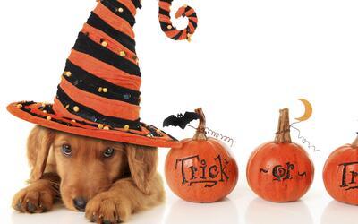 Disfraces originales: Que tus mascotas no se pierdan la fiesta de Halloween