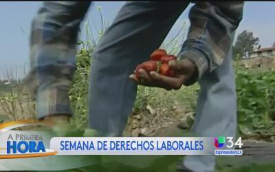 ¿Cuáles son los derechos de los trabajadores del campo en California?