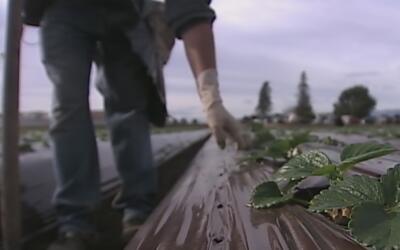 Activistas piden que sean prohibidos los pesticidas en campos de california
