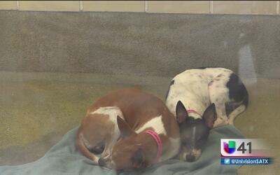 Perros abandonados serán dados en adopción
