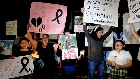 Protestan por la muerte del hipopótamo Gustativo tras una golpiza que re...