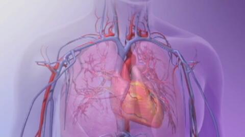 Sepa cómo detectar o prevenir enfermedades del corazón