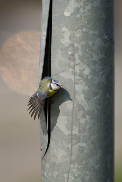 Ojalá su nuevo nido quede listo pronto y los vecinos no est&eacut...