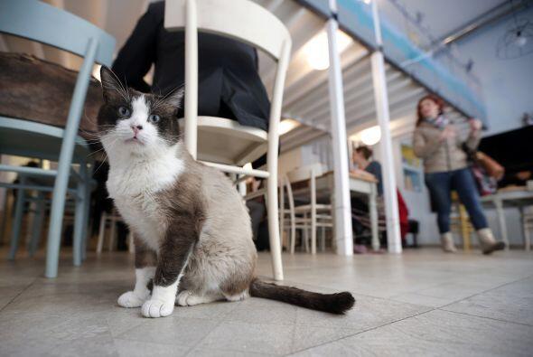 MiaGola es una cafetería 'petfriendly' especial para mascotas como gatos...