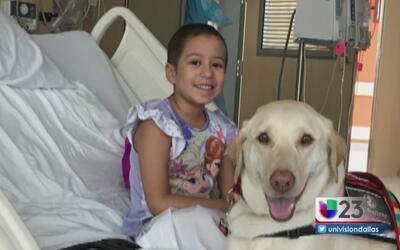 Niña de 5 años lucha contra un agresivo cáncer