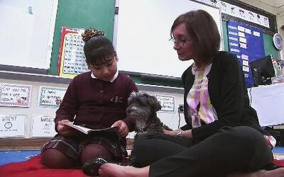 Aprendiendo inglés con perros