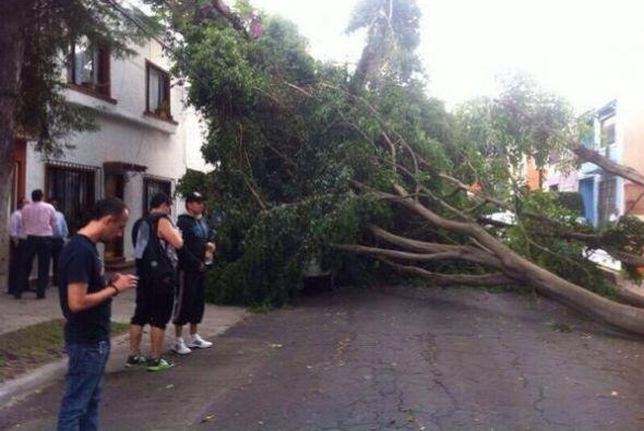 Entre los daños que se reportan se informa de varios árboles caídas en d...