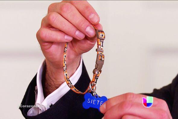 Y le tiene un gran regalo. ¡Un collar con su nombre para que no se...
