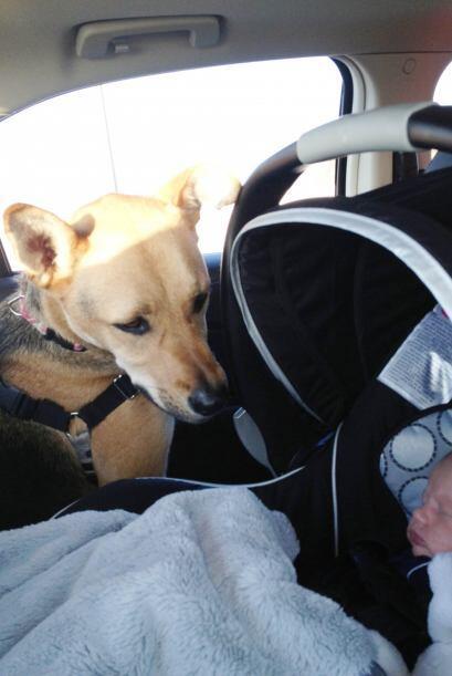 Toby es un adorable perro que desarrolló una relación muy...