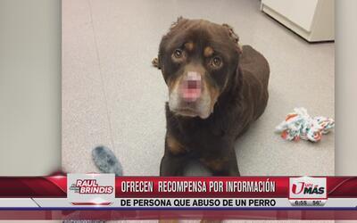 Ofrecen $2,500 por información de quien abusó de un perro