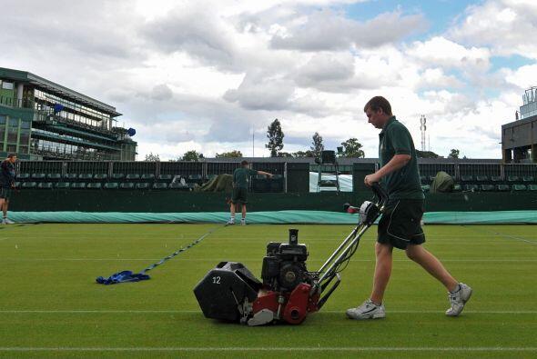 Todos los cuidados recibe la hierba inglesa de Wimbledon, la cual es de...