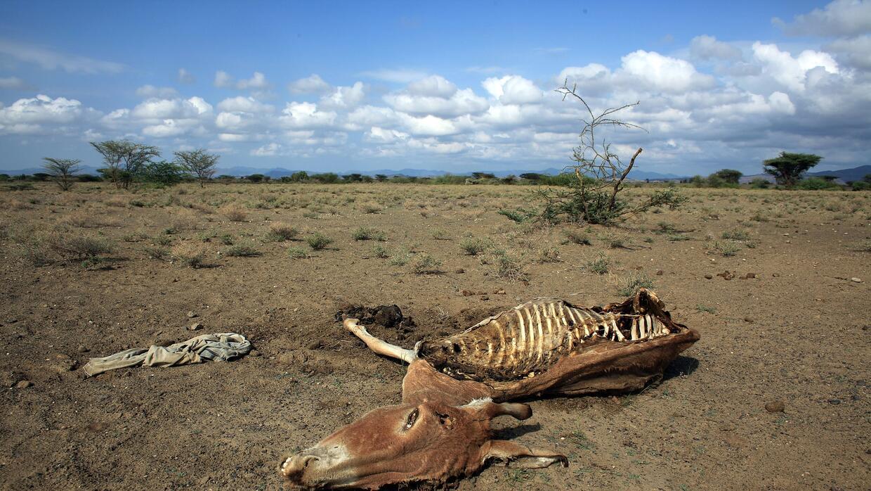 Las sequías en el este de África se han agravado por el cambio climático