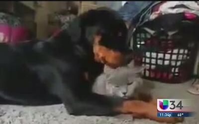 Perro y gato viven un amor sin límites