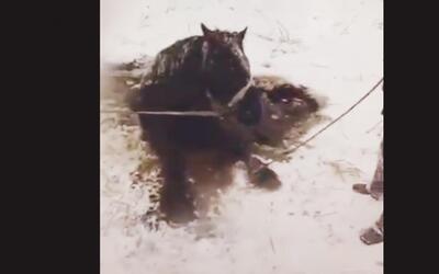 En video: el rescate de un caballo de las frías aguas en Canadá