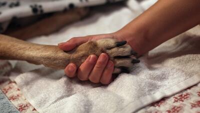 Crueldad Animal