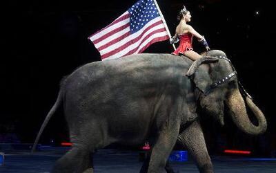 Circos se despiden de los animales