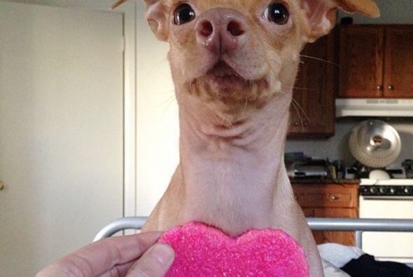 Tuna fue abandonado en los Ángeles pero su dueña lo rescat...