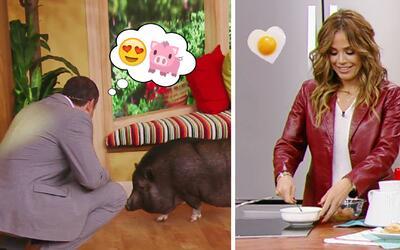 #DAEnUnMinuto: Alan tiene una nueva amiga y todos queremos desayuno de l...