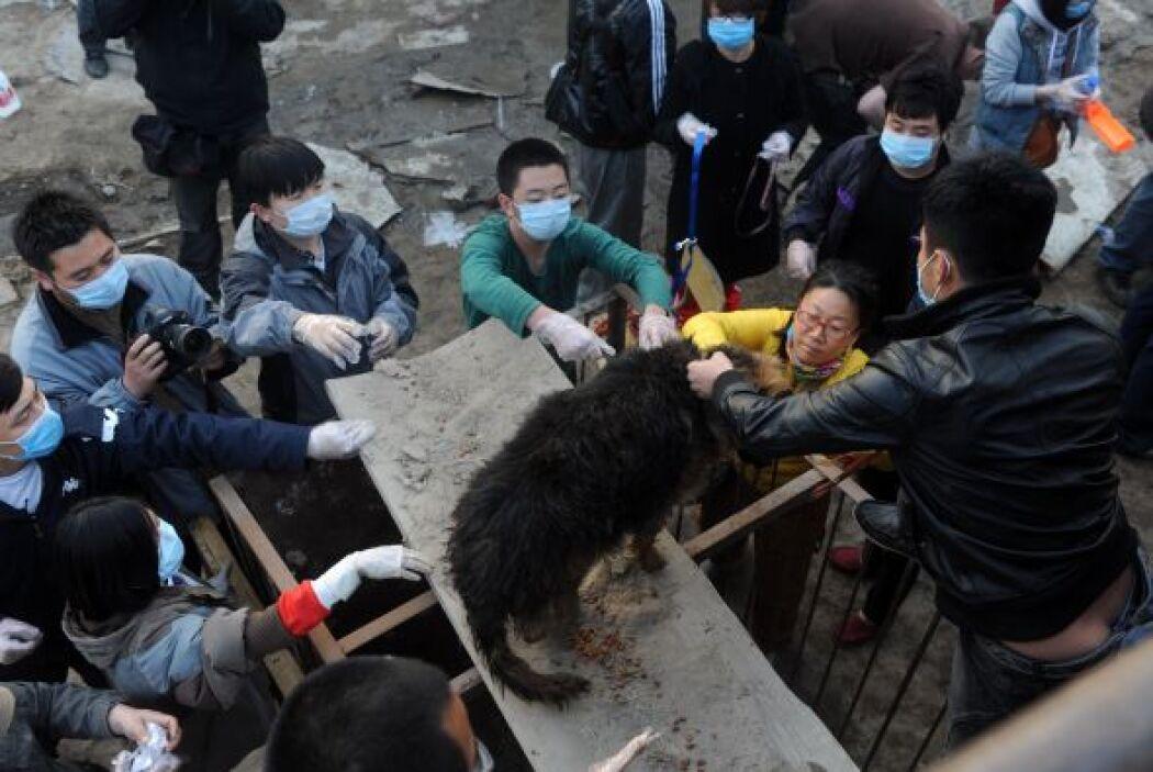 A través de una encuesta en China, se estima que a finales del 2009 habí...