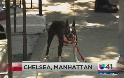 Mujer murió arrollada por salvar a su perro