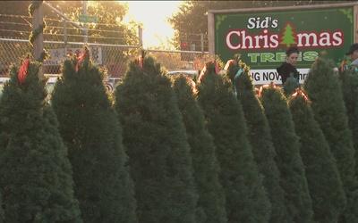 Suben costos de árboles de navidad