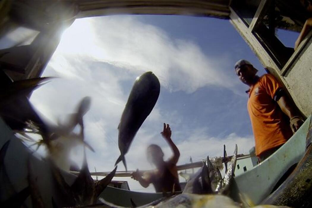 Por otro lado,  contra el uso del cartílago de tiburón se argumenta la e...