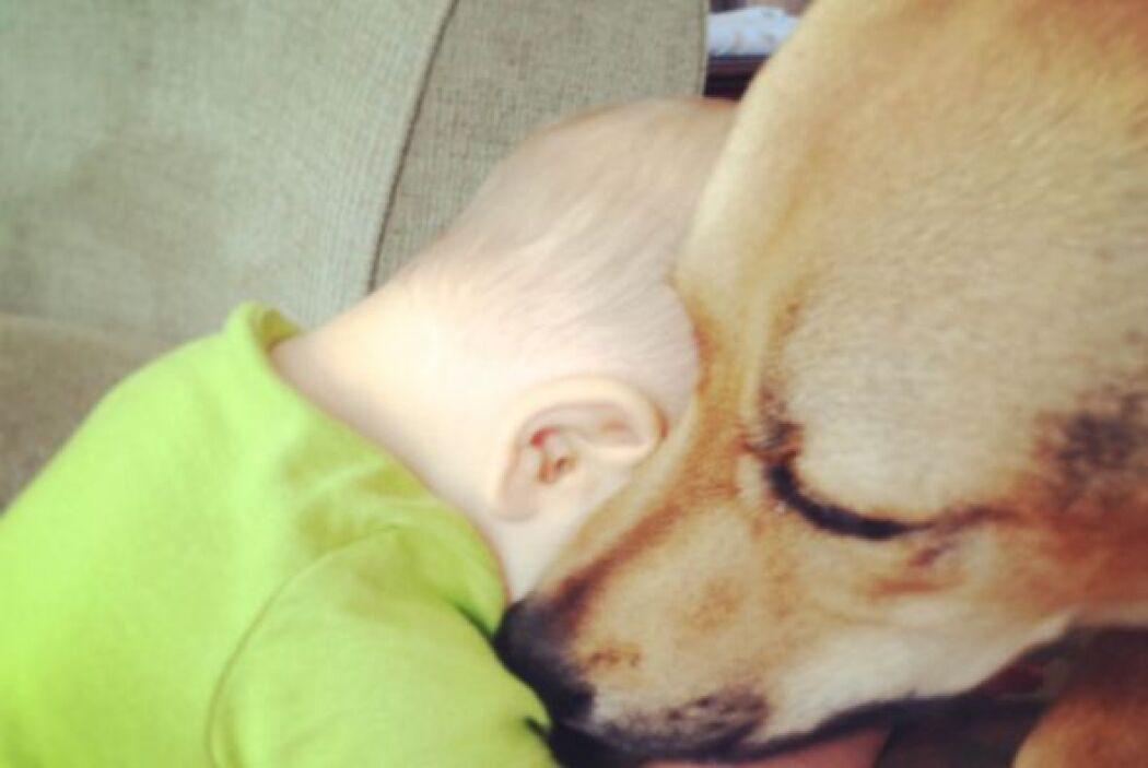 Desde que Carter llego a casa cuando era recién nacido, Toby mostró su p...