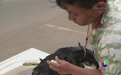Con su tina a cuesta un hombre con discapacidad baña perros a domicilio
