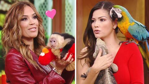 Karla Martínez y Ana Patricia se divirtieron con los animalitos que nos...