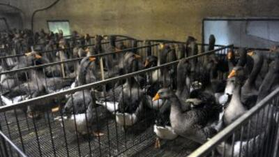 La FAO informó que600 mil aves han sido sacrificadas para controlar el...