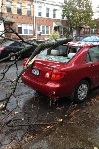 'Tu Cámara' usuario Fer AF árbol sobre auto  Antes de la llegada de 'San...