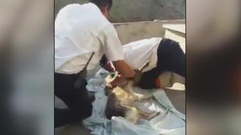 Hombre mató a sus 19 perros y se suicidó después, pero milagrosamente un...
