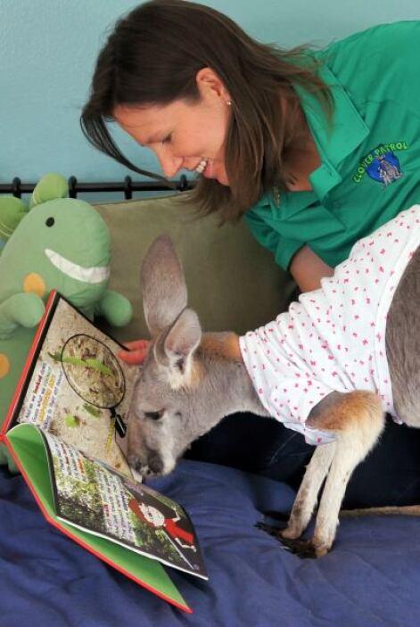 Julia es escritora de una serie de libros para niños, Bomeroo y ella vis...