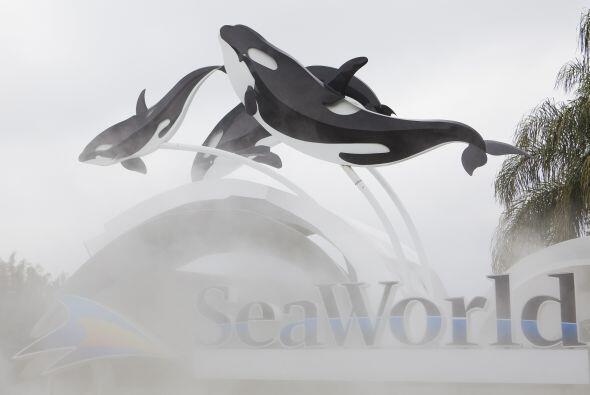 Los directivos de Sea World argumentaron que decidieron incorporar a Til...