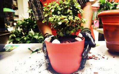 Cómo hacer el trasplante de una planta a una maceta sin problemas