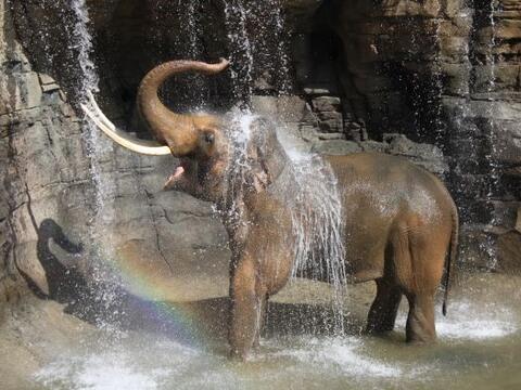 Los nuevos huéspedes del Zoológico de Los Angeles, dan apertura a la nue...