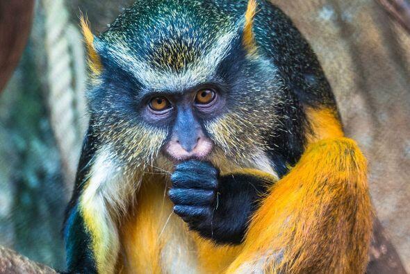 Lessy Sebastian retrató al extraño animal en el Secret Zoo...