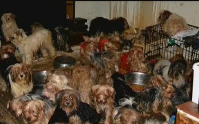 Decomisan 92 perros que permanecían en malas condiciones dentro de una v...