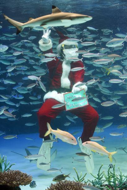 En Japón, Santa se dio un chapuzón en un acuario.