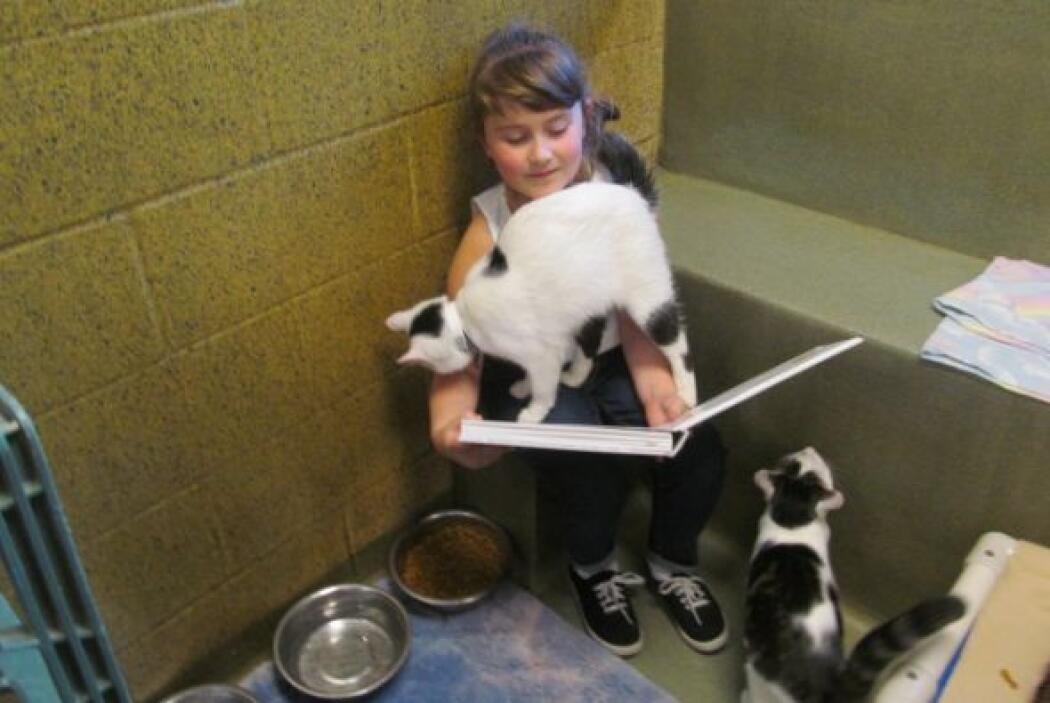 Cassandra lee cuentos a gatos en un refugio de animales como parte del p...