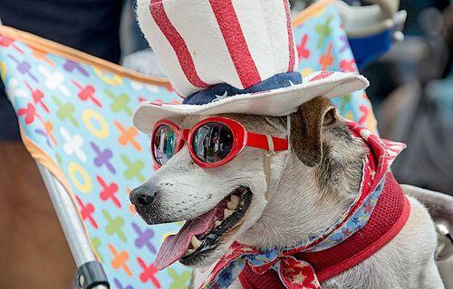 En Estados Unidos las mascotas también celebran la llegada del Año Nuevo.