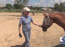 Kerstin cambia vidas con hipoterapia
