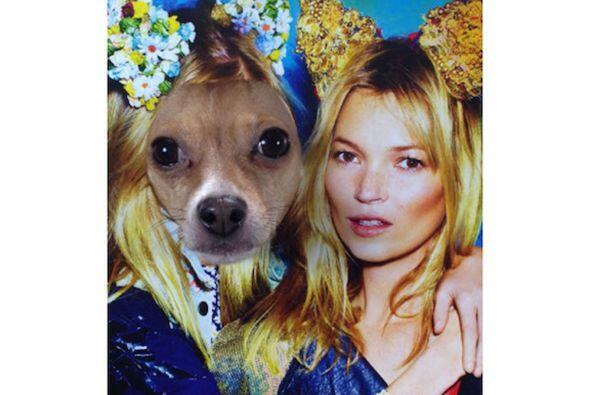 Y para un perro tan fashionista no podría faltar una foto con la celebri...