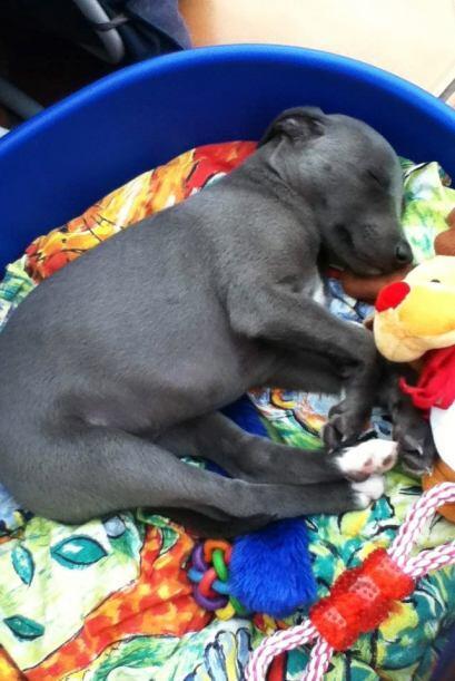 Después de largas sesiones fotográficas y poses, Rupert acaba exhausto a...