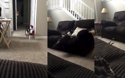 Este perrito cae estrepitosamente de un sofá pero intenta disimular que...