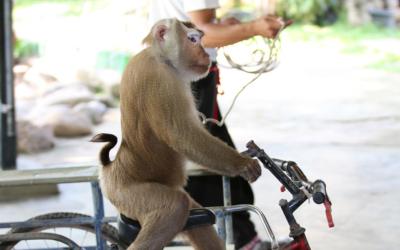 ¿Es mejor la comida orgánica que la convencional? mono.png