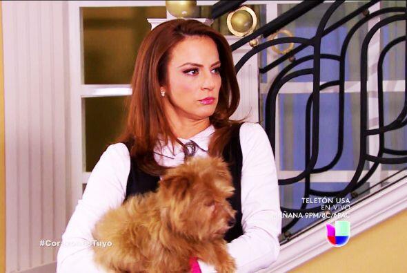 Protege muy bien a Siete, ya sabes que él e Isabela no se llevan nada bien.
