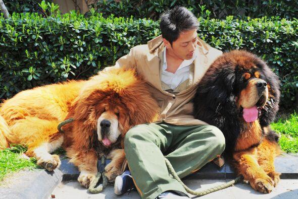 De acuerdo con la agencia de noticias AFP, el criador del perro relató a...